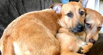 Un cane incontra il suo sosia randagio e si rifiuta di tornare a casa senza di lui: ora sono inseparabili!