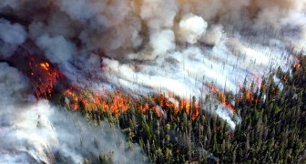 Le changement climatique pourrait conduire à l'effondrement de la civilisation humaine d'ici 2050, selon un nouveau rapport