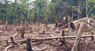Brazilië, uit de hand gelopen ontbossing: 739 km² Amazoneregenwoud alleen al in de maand mei 2019 vernietigd