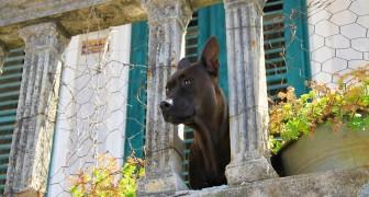 Finalmente una legge per tutelare i cani lasciati sui balconi: ecco cosa rischiano i padroni negligenti
