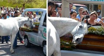 During a funeral, a horse joined the mourners to say goodbye to his best friend