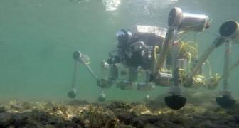 Un robot-granchio contro le microplastiche: al via il progetto tutto italiano per ripulire i fondali