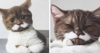 Ecco a voi Gringo, il gatto con i baffi che sta facendo innamorare chiunque