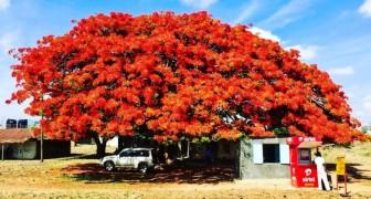 15 wunderschöne Bäume aus aller Welt, die Sie in Ihrem Garten pflanzen möchten