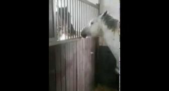 Aus unerklärlichen Gründen frisst ein Pferd nicht, wenn es gefüttert wird. Und hier ist der überraschende Grund dafür :)