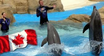 Canada keurt een historische wet goed die de gevangenschap van dolfijnen, orka's en walvisachtigen van alle soorten verbiedt