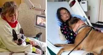 In dit ziekenhuis mogen patiënten bezoek van hun honden ontvangen, en de foto's doen het hart goed