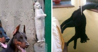16 der rücksichtslosesten Katzen der Welt, die auch Ihren traurigsten Tag erhellen werden