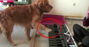 Un perro como se dice: con un elevado oido musical