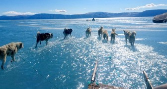 Groenlandia, record di scioglimento dei ghiacci: a rischio quasi la metà della calotta glaciale