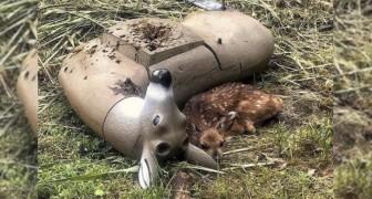 Un cerbiatto confonde un bersaglio da caccia per sua madre: l'immagine è tenera e straziante insieme