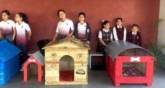 Questi bambini realizzano cucce per cani con materiali riciclati: l'iniziativa è subito un successo