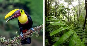 Il miracolo verde del Costa Rica: raddoppiato il numero delle sue foreste pluviali in 30 anni