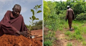 Gracias a sus antiguos conocimientos, este hombre ha transformado el desierto en un bosque exuberante con plantas y animales