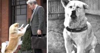 L'histoire vraie de Hachiko, le chien qui a ému le monde entier avec son amour et son dévouement