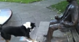 The poor dog can't understand why the gentleman doesn't want to play !
