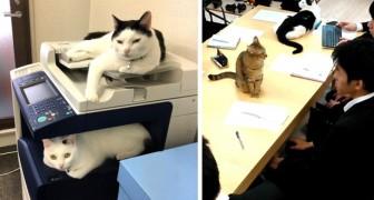 Dieses japanische Unternehmen hat Katzen adoptiert, um den Stress bei der Arbeit der Mitarbeiter zu reduzieren