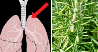Rosemary can alleviate stress, improve memory loss and prevent dandruff and alopecia