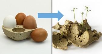 Ecco il Biopack, il cartone per uova che dopo l'uso... si pianta e germoglia!