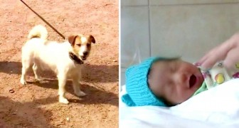 Here is Macho, the hero dog who saved a newborn baby girl abandoned behind some thick bushes!