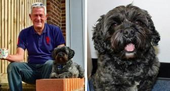 La storia di Ted, il cane che ha fatto risvegliare il suo padrone dal coma farmacologico