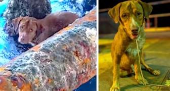 Salvano un cane incastrato sotto una piattaforma petrolifera: il loro coraggio commuove tutti