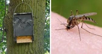 Om muggen definitief te verwijderen, moet je een vleermuis adopteren!