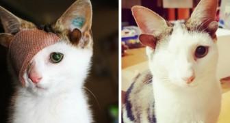 Eindelijk heeft dit katje met 4 oren en één oog een gezin gevonden dat hem genegenheid geeft