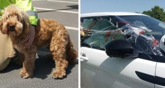 Brandweerlieden redden het leven van een hond die in de hete zon in de auto is achtergelaten