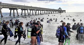 Ces 633 plongeurs ont écrit l'histoire en effectuant le plus grand nettoyage sous-marin jamais vu