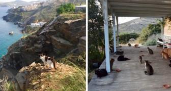 Deze opvang voor katten op een prachtig Grieks eiland zoekt een verzorger die voor de 55 schattige bewoners zorgt