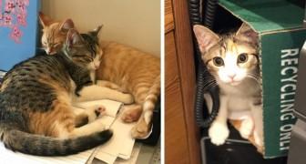 Una compagnia adotta due gattini per ridurre lo stress dei dipendenti... e il risultato supera le aspettative!