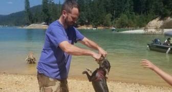 Een hond overlijdt twee uur na het spelen in het water: de waarschuwing voor alle eigenaren om dit gevaar te voorkomen