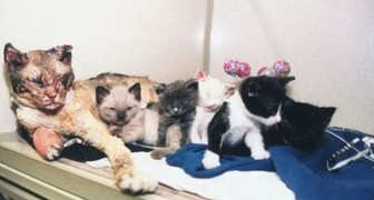 The story of Scarlett, the mother cat who went through fire 5 times  --- to save her little kittens!