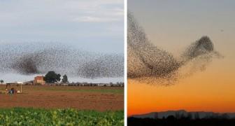 Er macht Fotos von einem Vogelschwarm: Als er nach Hause kommt, merkt er, dass er ein episches Bild aufgenommen hat