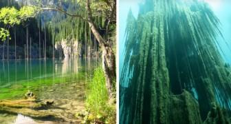 Voici la surréaliste forêt sous-marine où les arbres poussent à l'envers