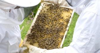Dal Trentino arriva Beehave, l'app che monitora lo stato di salute delle api e protegge l'eco-sistema