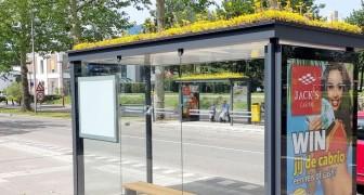 Nederland: de daken van bushaltes zijn bedekt met planten om bijen aan te trekken en de lucht schoon te maken