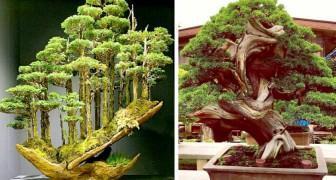 Questo artista giapponese crea dei bonsai che sembrano delle vere e proprie foreste in miniatura