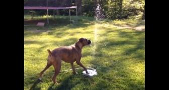 Dieser Boxer findet die neue Pumpe im Garten extrem gut :D
