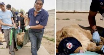 Ce héros vétérinaire sauve des animaux en difficulté dans les zones de guerre du monde entier