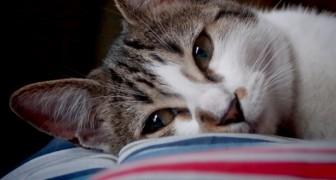 13 signes cachés pour savoir si votre chat vous dit je t'aime