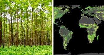 Het planten van een miljard hectare bomen kan het broeikaseffect onschadelijk maken
