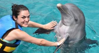 Dieser Verein sucht Freiwillige, die nach Kroatien reisen und Delfine retten helfen