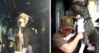 Eine Fahrerin adoptierte einen heimatlosen Pit Bull, nachdem der Besitzer verschwunden war