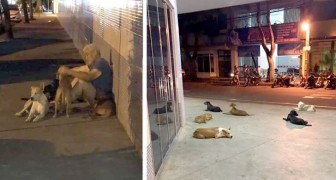 A homeless man is hospitalized and all his four-legged friends wait for him patiently outside the hospital