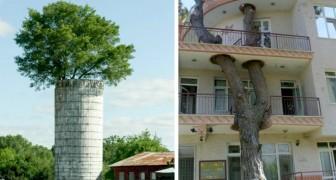 Questi edifici in tutto il mondo ci dimostrano come uomo e Natura possano essere una coppia perfetta