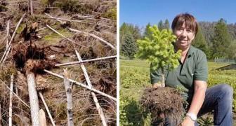In arrivo oltre 400mila nuovi abeti per ripopolare le foreste distrutte dal maltempo in Val di Fiemme