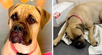 The story of Maru, a dog that traveled 124 miles (200 km) to return to her owners