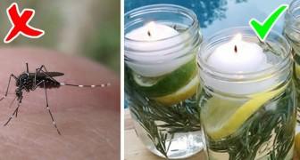 Hoe maak je het zelf een natuurlijk afweermiddel tegen vliegen en muggen, voor een zomer zonder te worden gestoken
